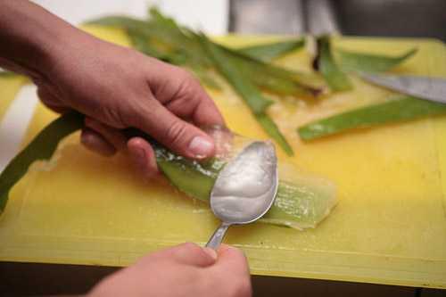 Chữa tàn nhang bằng nước vo gạo và nha đam